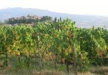Castel Brunello - aut01