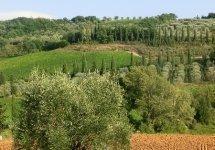 Castel Brunello - aut13